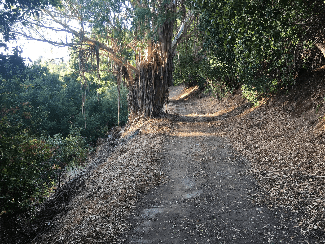 Get to know the future Linda Vista trail