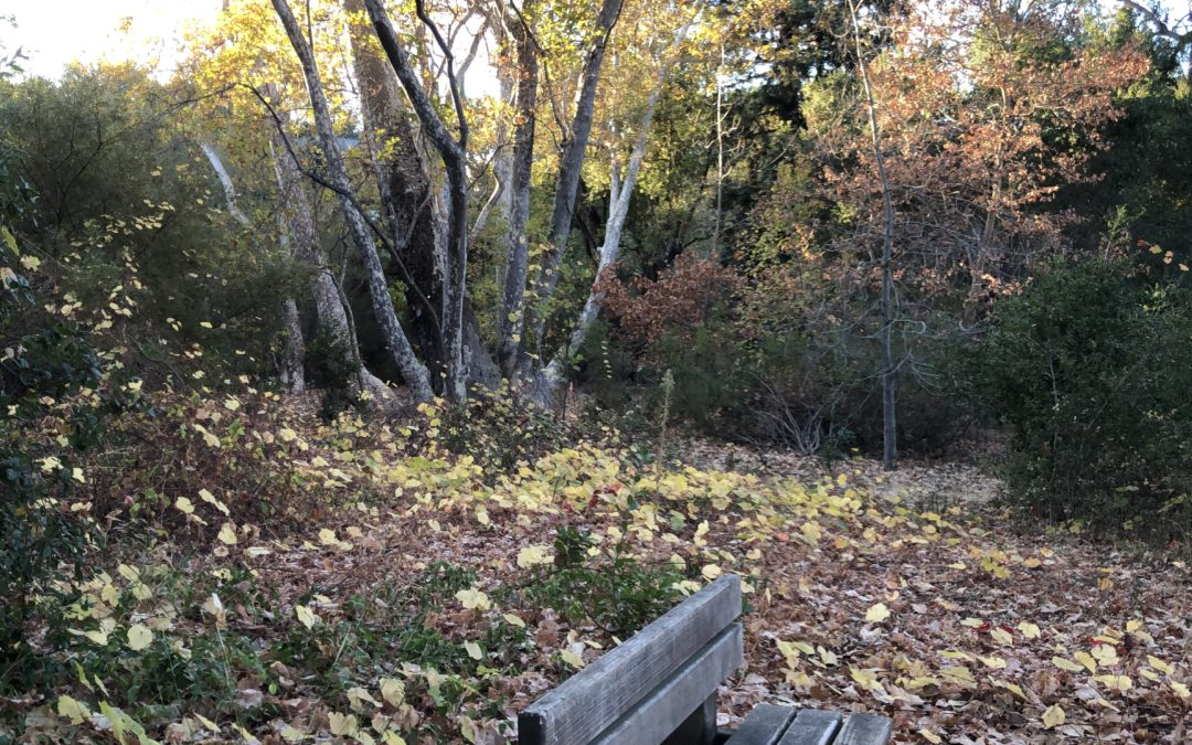 Walking Cupertino's West Side Parks