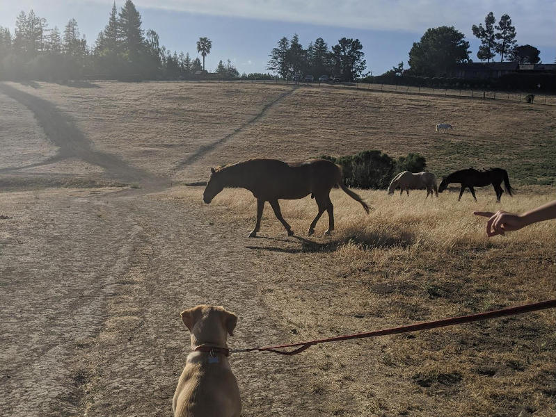 Trail Review: Byrne Reserve Hiking Trail