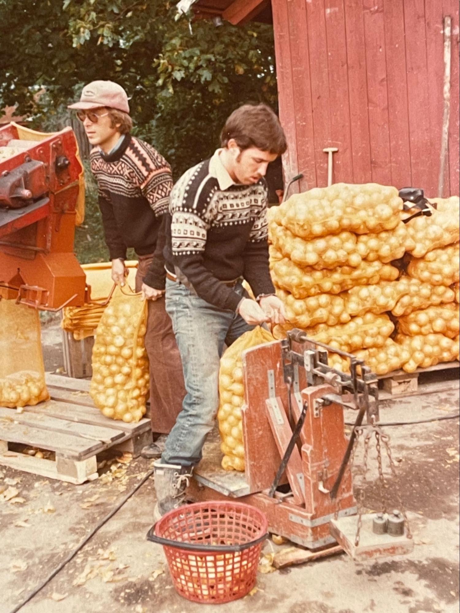 Onion season in Larvik
